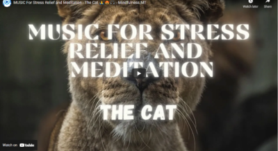 MUSIC For Stress Relief and Meditation - The Cat