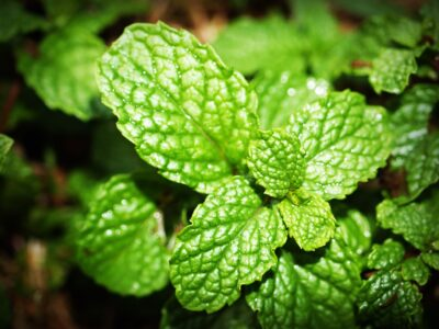 Increase your Memory with Essential Oils in Aromatherapy
